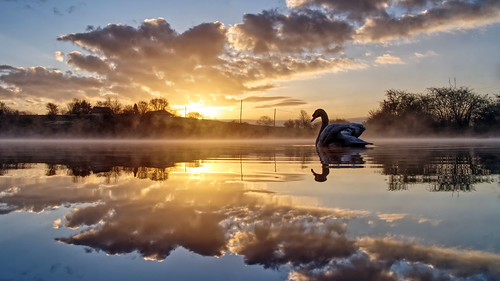 daisynook countrypark crimelake failsworth manchester oldham swan clouds sunrise dawn reflection mist crimefarm buildings still calm beautiful serene trees morning hollinwoodcanal misty mirror uk cygnusolor muteswan waterfowl waterside lowpointofview