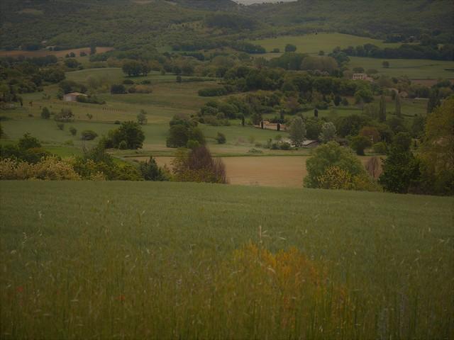 Umland von Reillanne, France, Provence b