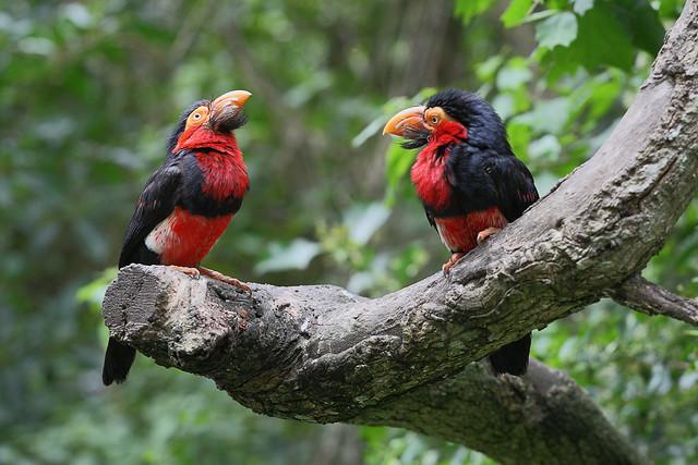 South Africa - Birds of Eden