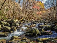 Smoky Mountain Stream 2013-11 01