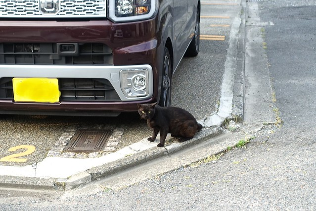 Today's Cat@2019-06-20