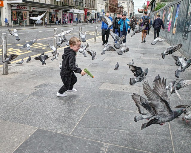 Shooting the Pigeons!