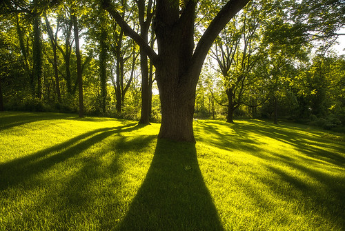 thursday tbt summer beautiful june solstice shadows life nature outdoors flx canon 2019 landscape peaceful