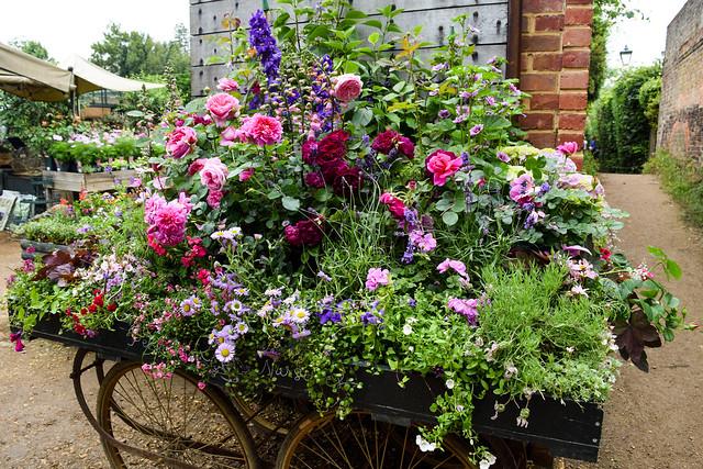 Nursery Flowers at Petersham Nurseries, Richmond