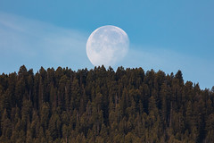 Moonset over Mammoth Hot Springs