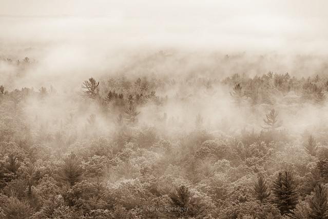 Pere Marquette Forest