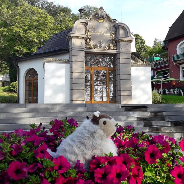 Juni 2019: Karla Kunstwadl mit V&J in Badenweiler ... Foto(s) von Volker