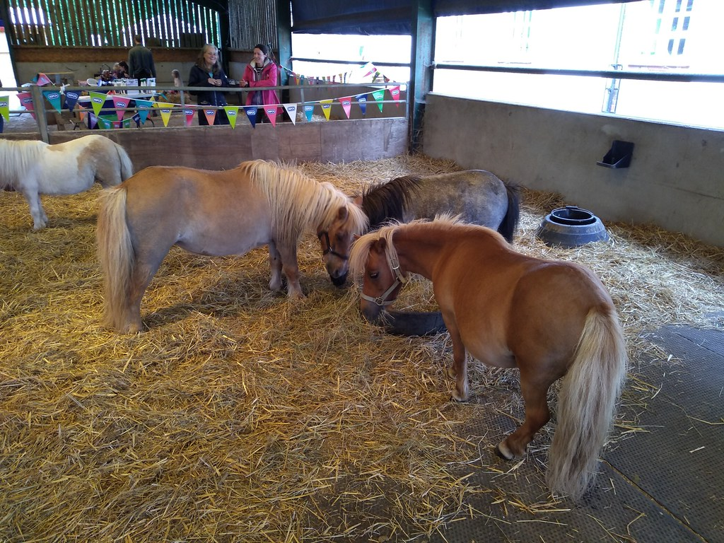Lockwood ponies Brings back memories of Norman Thelwell