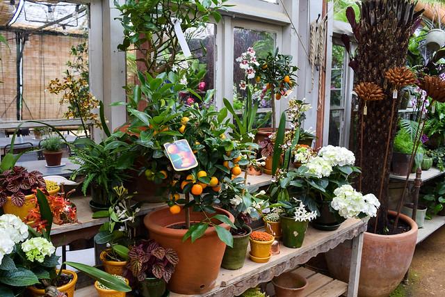 Conservatory Plants at Petersham Nurseries, Richmond