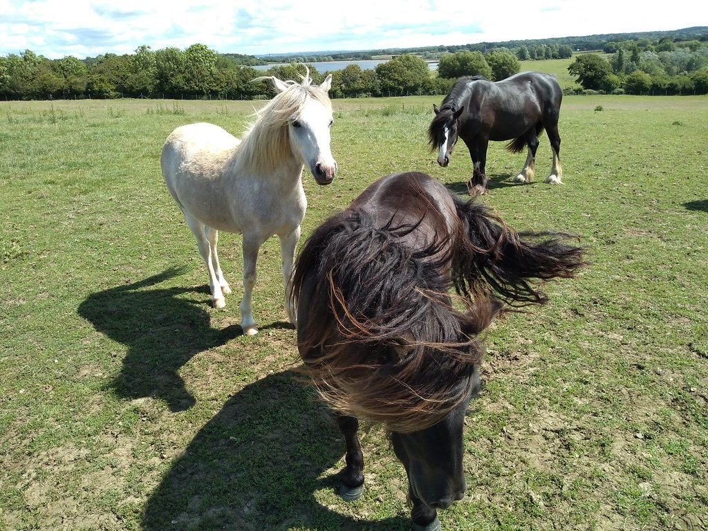 Three equines and a reservoir I'm having a bad mane day