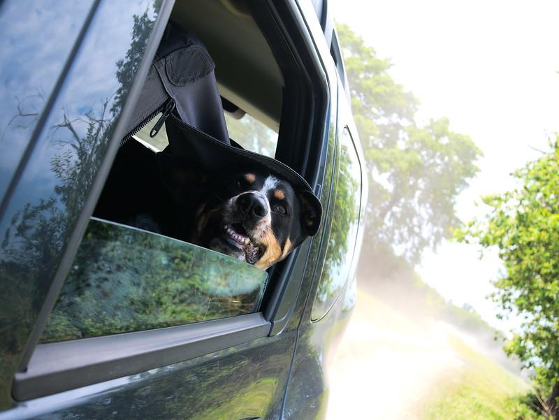 rozjechanie psa samochodem