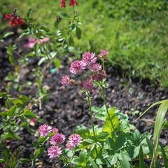 Garden June 2019