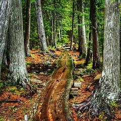 Acadia woods walk