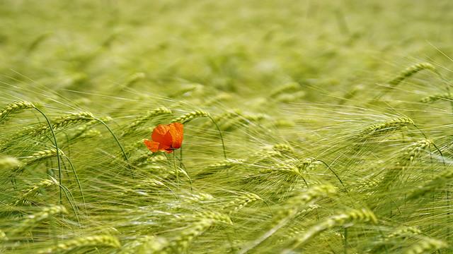 red solitude