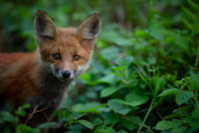 curious in the undergrowth