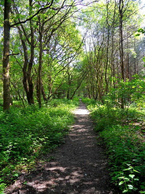 Walking through the woods RAF Tilstock #woods #woodland #trees #treescape #path #countryside