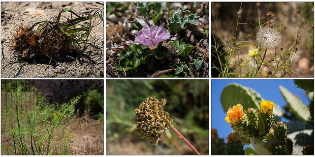 Botanik in der vegetationsreichen Schlucht Barranc de Binigaus