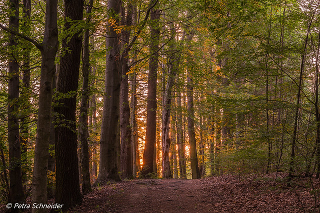 Forest with a glow
