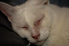 Me dormí!