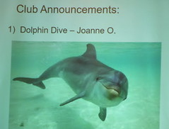 The Dolphin Wants Your Help Too!