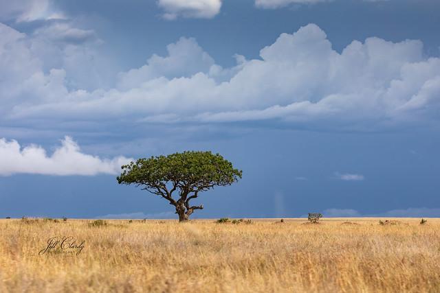 Storm Over The Serengeti
