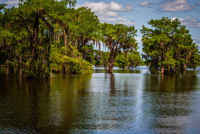 Spanish Moss Filled Trees