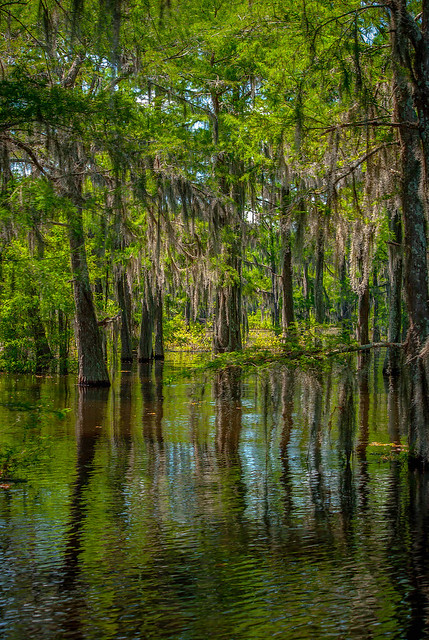 Reflections on the Atchafalaya
