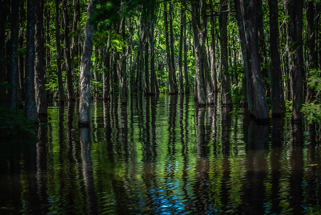 Shady Swamp Land