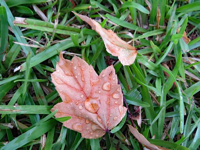 Pair Of Leaves.
