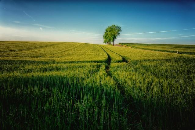 The hidden beauty of farmland