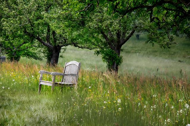 Sommer und Entspannung auf einer Bergwiese