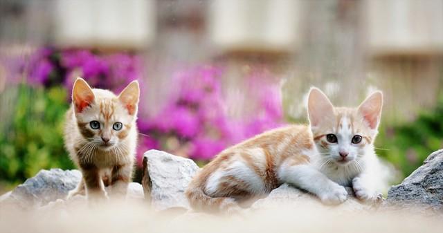 Stray kittens - Gatitos callejeros