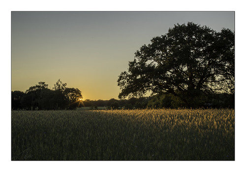 ootmarsum sunset tree contour grain grainfield sky boom graanveld zonsondergang twente overijssel netherlands evening peaceful