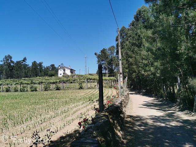 Camino Portugues (13 von 41)