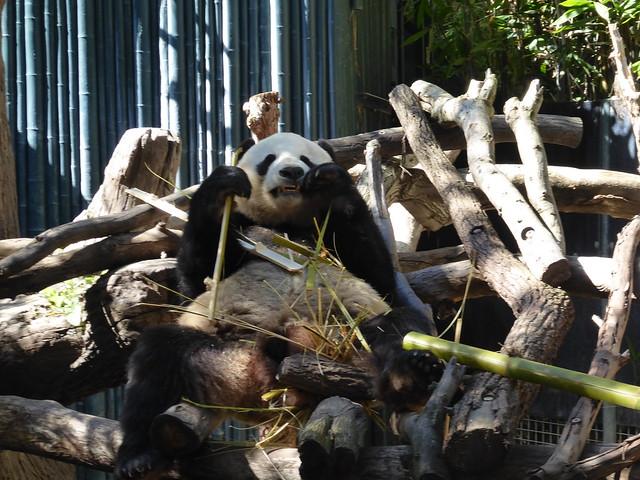 San Diego Zoo Feb 2019