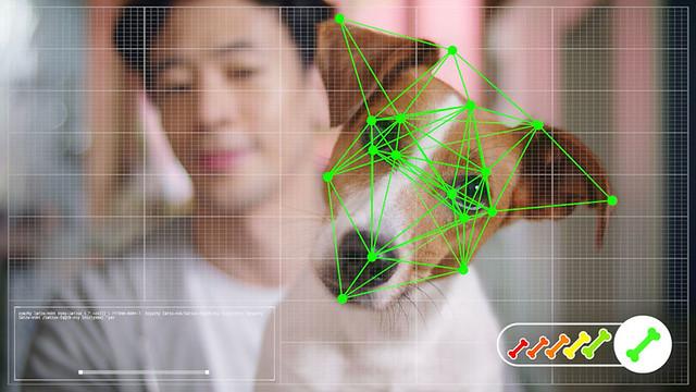 pet-facial-recognition-CONTENT-2019
