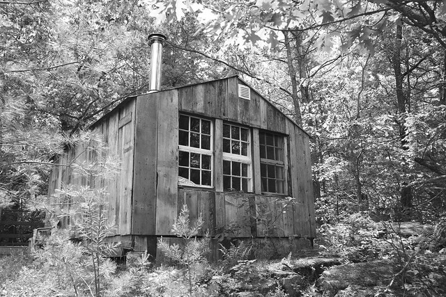 Bunkie in the woods