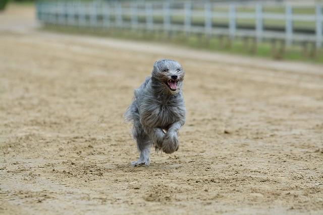 Jeder Hund Rennen am 20.06.2019