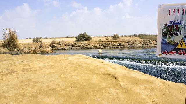 A dog passing by Fayoum's Wadi El-Rayan