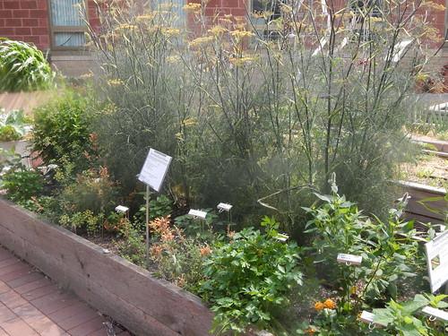 pollinator herb garden