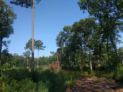 Photo of trees and trail in Chesapeake Forest Lands