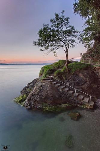 tree babbacombe longexposure nikond7200 seascape steps minimalist bluehour sunset rocks torbay devon
