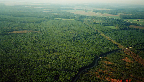 Aerial photo of Chesapeake Forest Lands