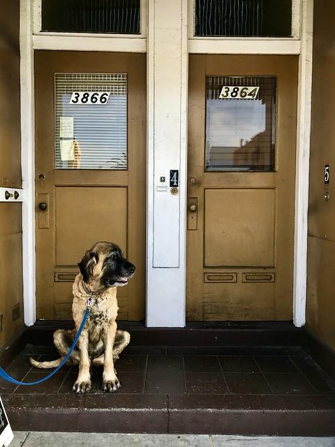 Doggo in doorway, Noe Valley, San Francisco