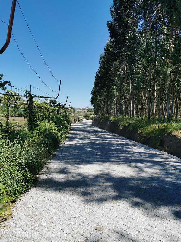 Camino Portugues-120221