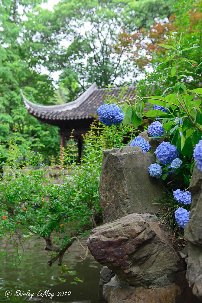 Sense of Zen