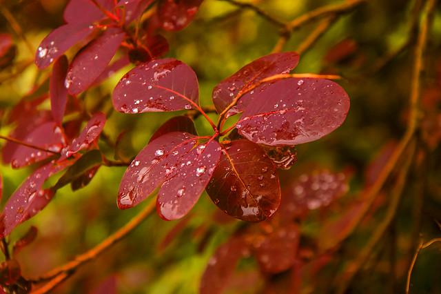 Wet Leaves_6022