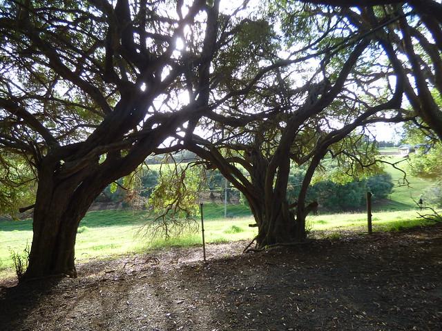 100 Acres Reserve, Norfolk Island
