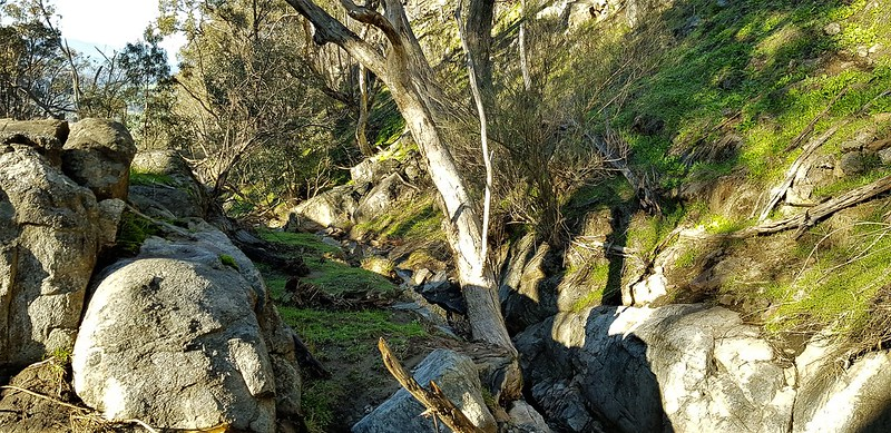 blue gum gully