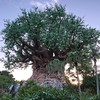 The Tree of Life at Animal Kingdom #animalkingdom #wdw #waltdisneyworld #treeoflife